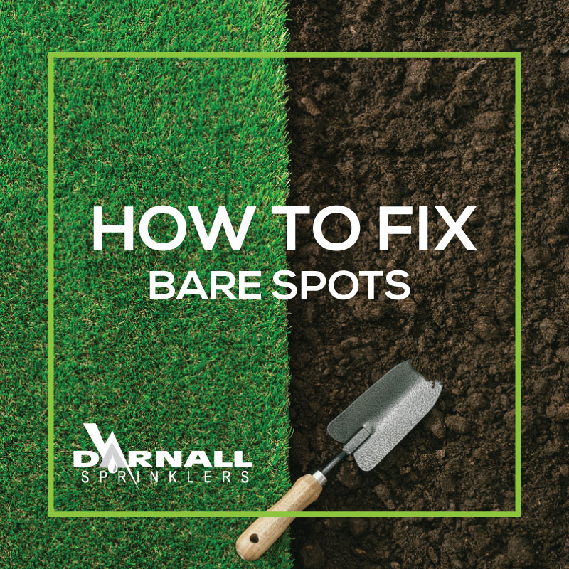 Fixing Lawn Bare Spots