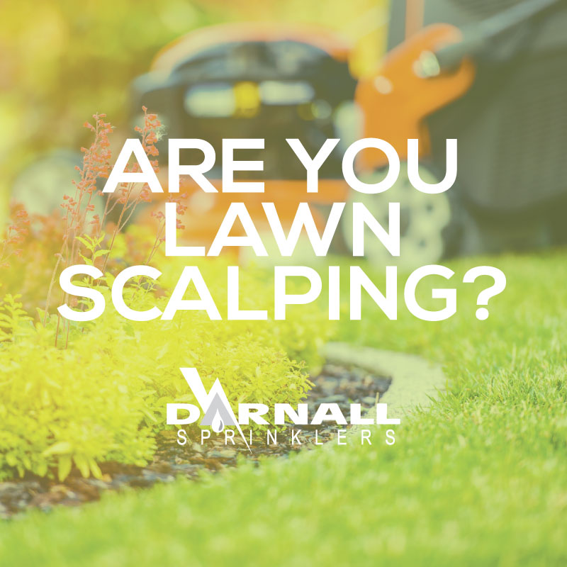 Lawn Scalping Tips
