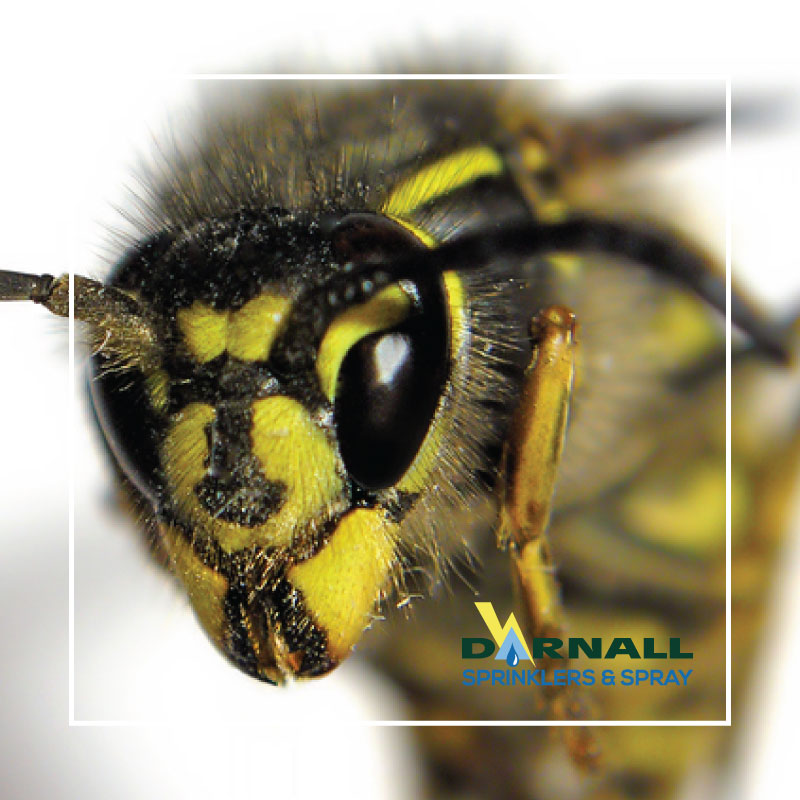 10 Facts About Wasps